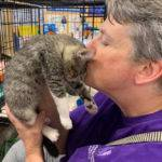 Volunteer to rescue cats and dogs