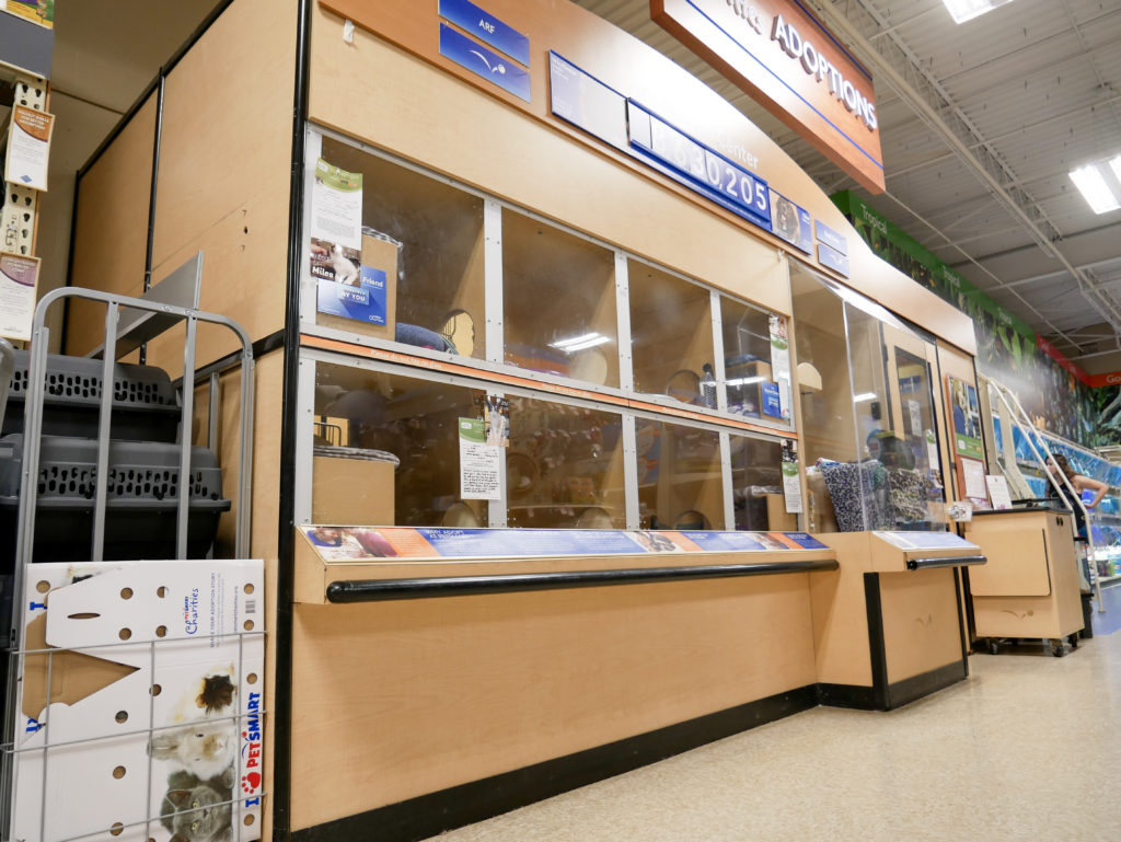 Wheaton PetSmart Adoption Center - Adopt a Cat Here