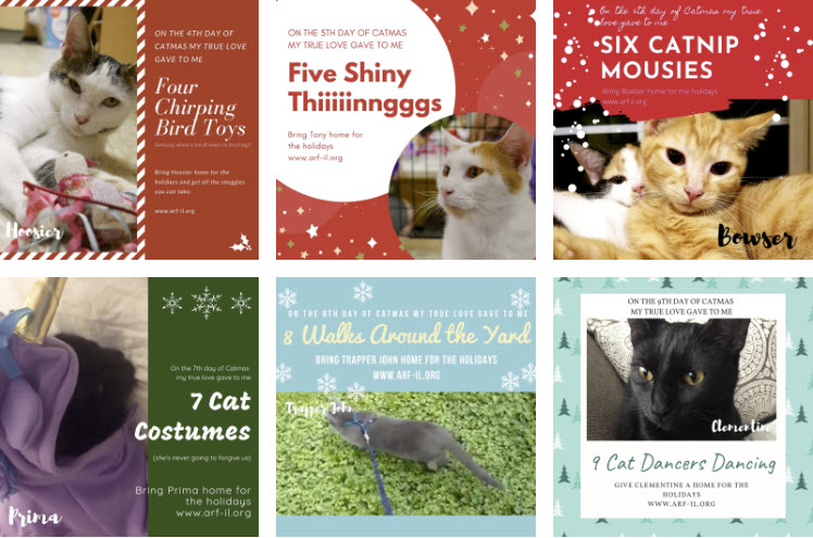 12 Days of Catmas - Adopt a Cat