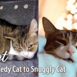 Pinot Cat Rescue Story