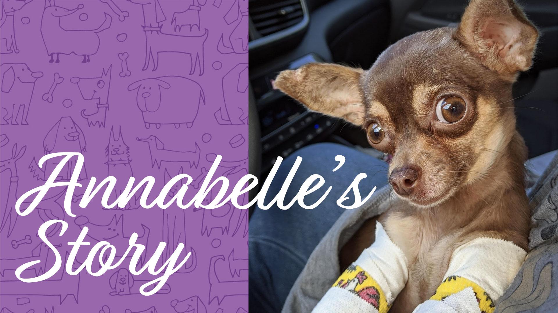 Annabelle Foster Puppy