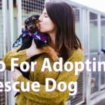 Prep for Adopting a Rescue Dog