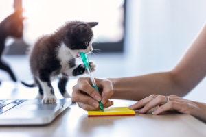 Adopting Kittens in Pairs