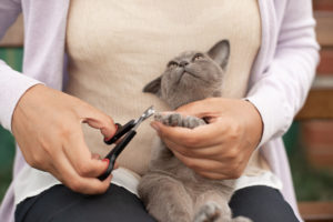 New adopted kitten care, trimming kitten nails